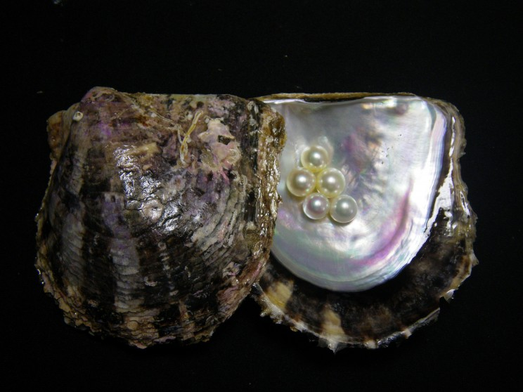 Blog The Beauty Of Clam Pearls We Clark Son